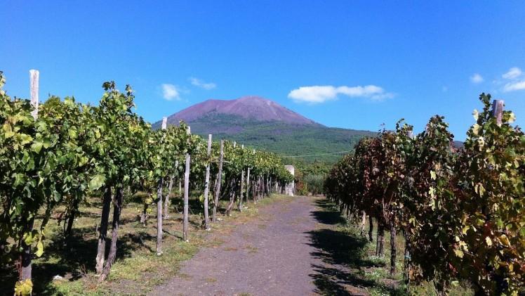 vineyard2